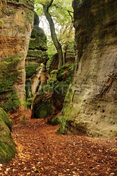 Autumn in the rocks Stock photo © ondrej83