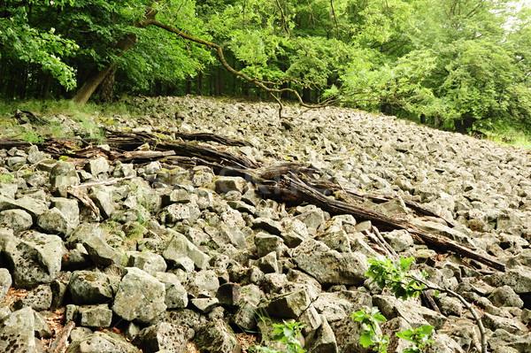 海 石 風景 石 ツリー ストックフォト © ondrej83