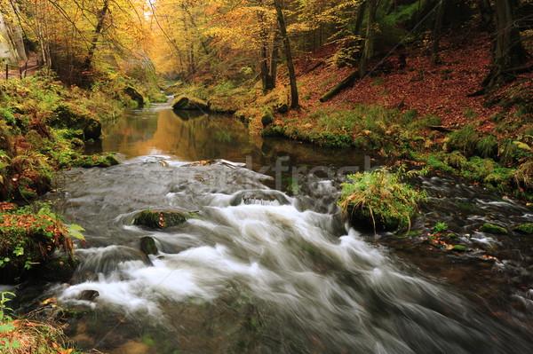осень цветами реке деревья листьев Сток-фото © ondrej83