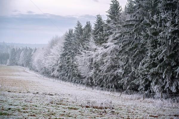 морозный зима пейзаж туманный покрытый снега Сток-фото © ondrej83