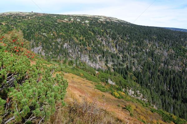 мнение пейзаж дерево трава лес фон Сток-фото © ondrej83