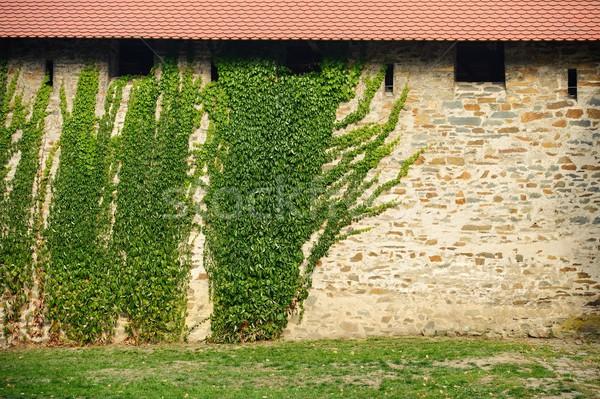 Kale duvar sarmaşık eski kapalı yeşil Stok fotoğraf © ondrej83