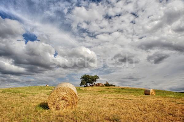 Stro weide blauwe hemel zon zomer veld Stockfoto © ondrej83