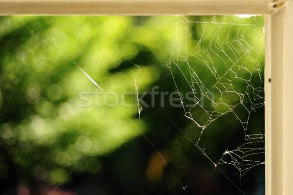Spinnennetz Spinnennetz Ecke alten weiß Fenster Stock foto © ondrej83