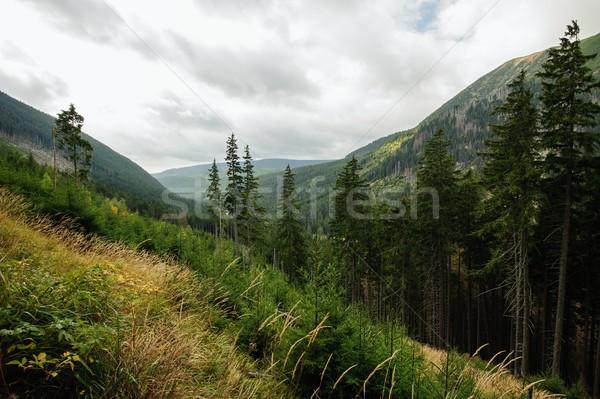 мнение пейзаж небе дерево природы фон Сток-фото © ondrej83