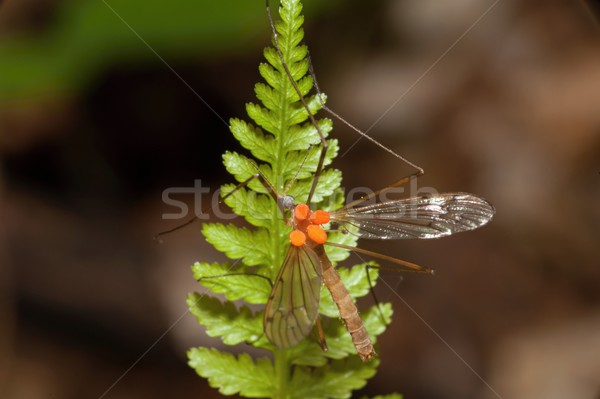 Insects in the woods at the bracken Stock photo © ondrej83