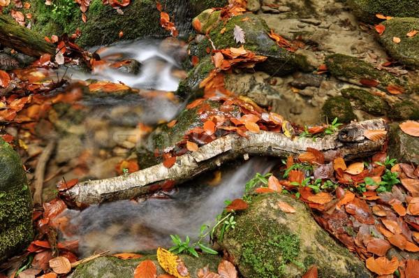 ősz patak színes levelek ágak nyírfa Stock fotó © ondrej83