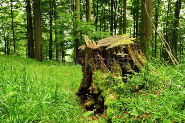 Stock photo: Old stump in the grass