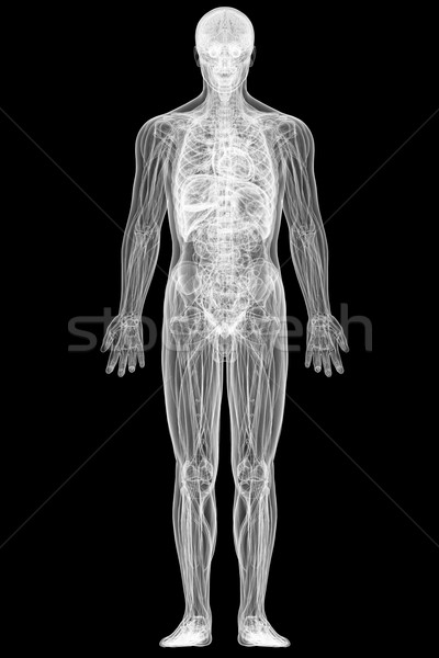 X-ray view of full human body isolated on black  Stock photo © oneo