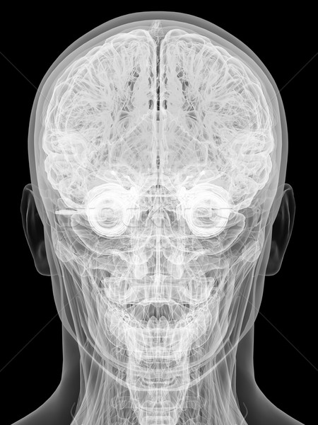 X-ray view of human head isolated on black Stock photo © oneo