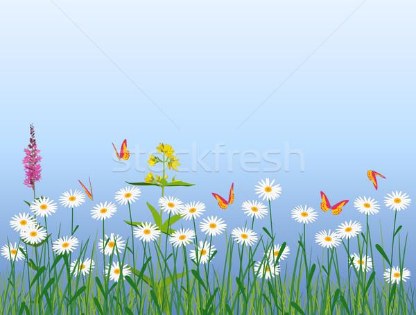 Weide bloemen vlinders gras vlinder Stockfoto © Onyshchenko