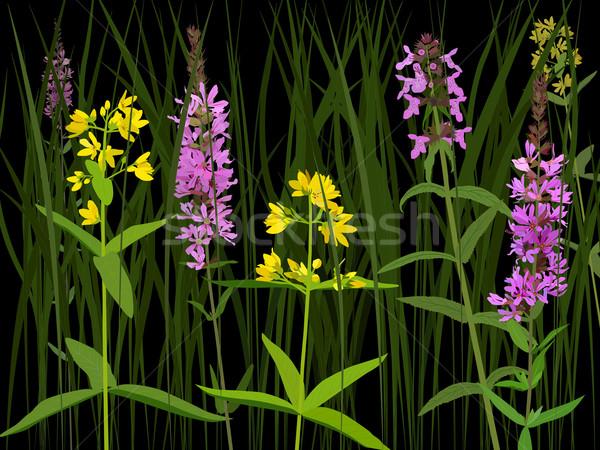 Weide kruiden drie soorten nat bloemen Stockfoto © Onyshchenko