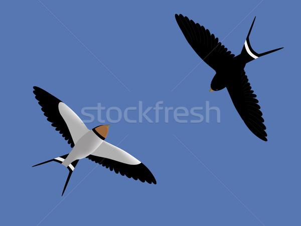 Flying swallows Stock photo © Onyshchenko