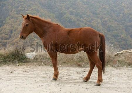 Horse Stock photo © oorka