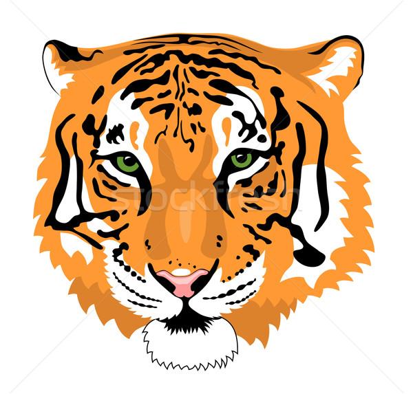 Tiger Stock photo © oorka