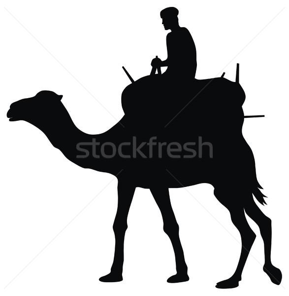 Cameleer Stock photo © oorka