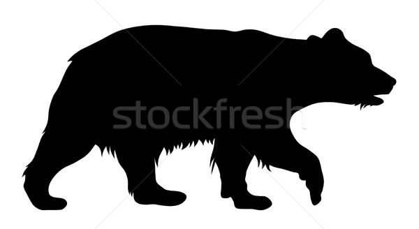 Bear Stock photo © oorka