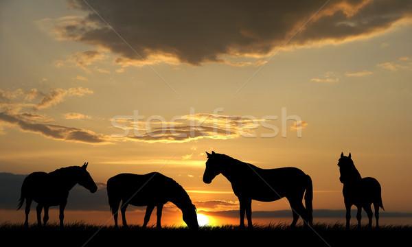 Horses Stock photo © oorka