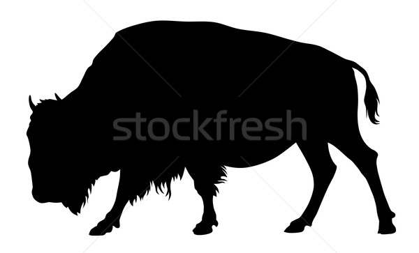 Buffalo Stock photo © oorka