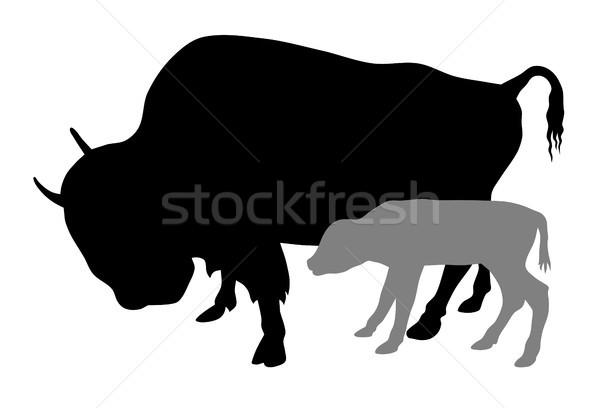 Buffalo Stock photo © oorka