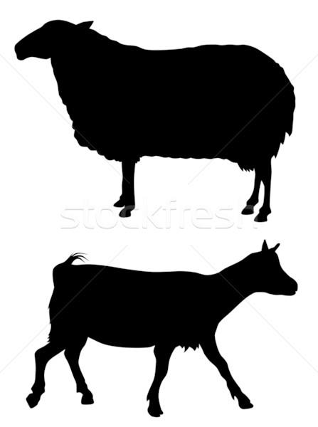 Farm animals Stock photo © oorka