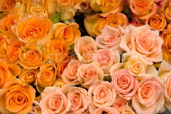 Rozen groep roze oranje textuur bruiloft Stockfoto © oorka