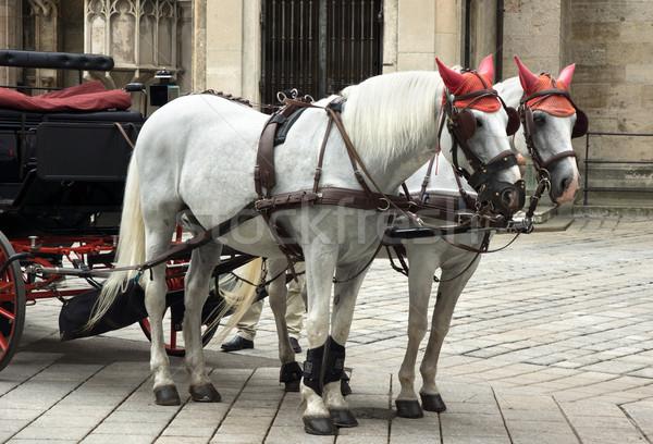 Fuvar lovak katedrális Bécs Ausztria romantikus Stock fotó © oorka