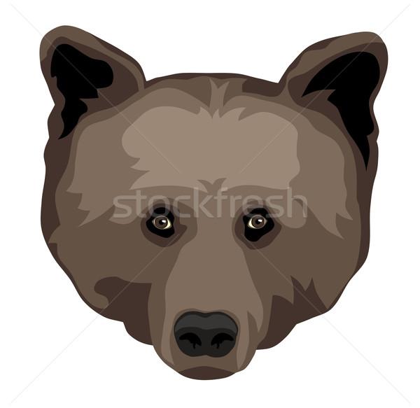 Medve fej elöl kilátás Stock fotó © oorka