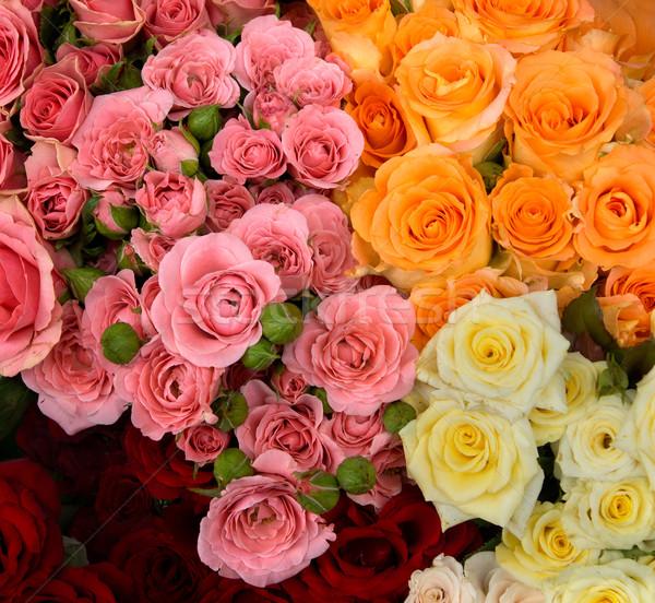 Csoport piros rózsaszín citromsárga narancs textúra Stock fotó © oorka