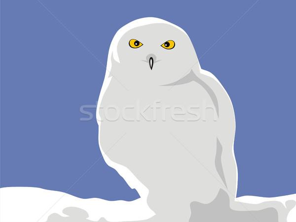 The bird of Minerva Stock photo © oorka