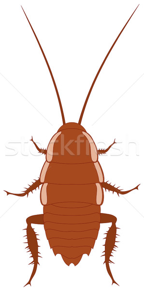 Hamamböceği kahverengi hayvan böcek örnek Stok fotoğraf © oorka