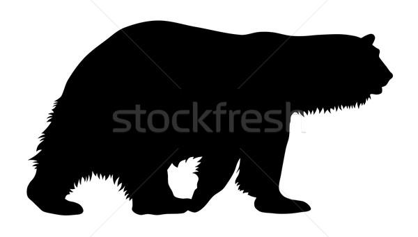 Urso polar silhueta animal vetor ilustração predador Foto stock © oorka