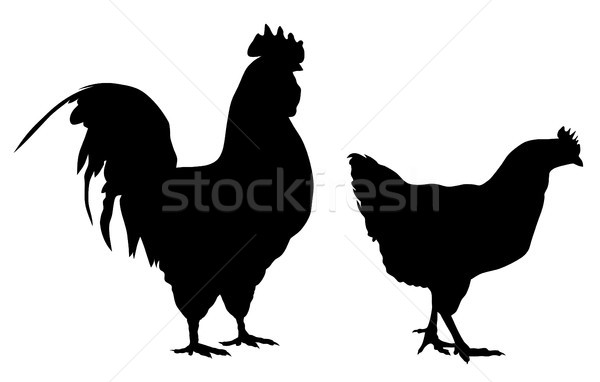 Rooster and hen Stock photo © oorka