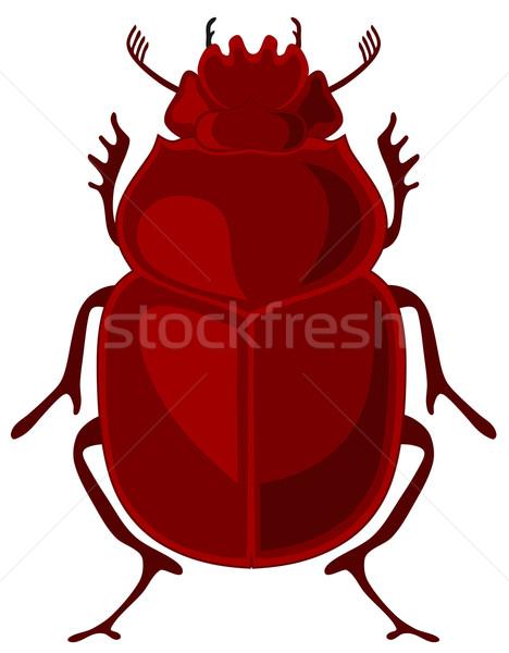 Escaravelho besouro inseto Egito Foto stock © oorka