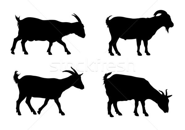 Kecskék sziluettek fehér sziluett állat kecske Stock fotó © oorka