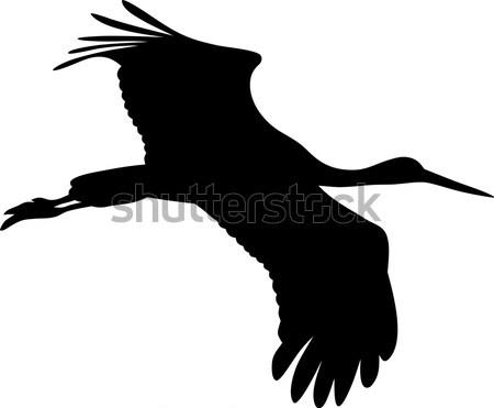 Vliegen ganzen abstract vogel dier Stockfoto © oorka