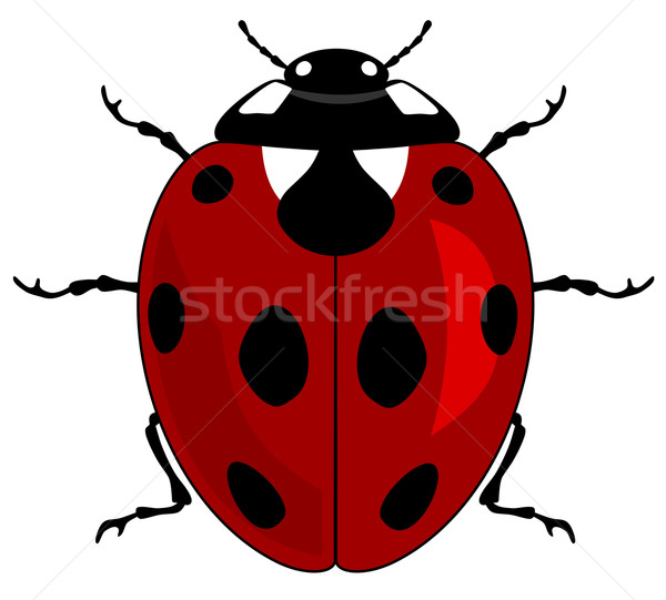 Coccinelle rouge insecte bug illustration saison Photo stock © oorka