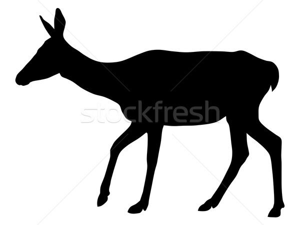 Vector illustration of roe silhouette Stock photo © oorka