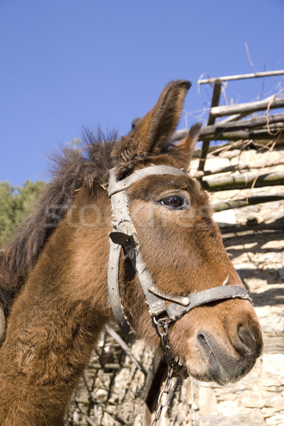 Szamár csomag falu hegy farm fenék Stock fotó © oorka