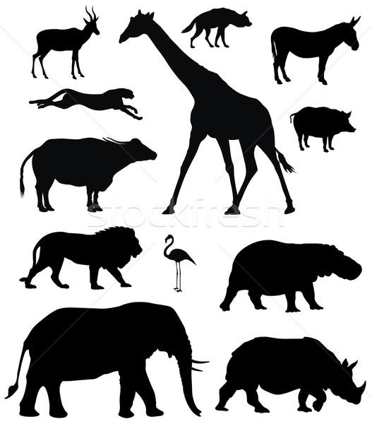 African animals Stock photo © oorka