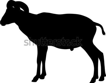 Ló absztrakt sziluett illusztráció Stock fotó © oorka