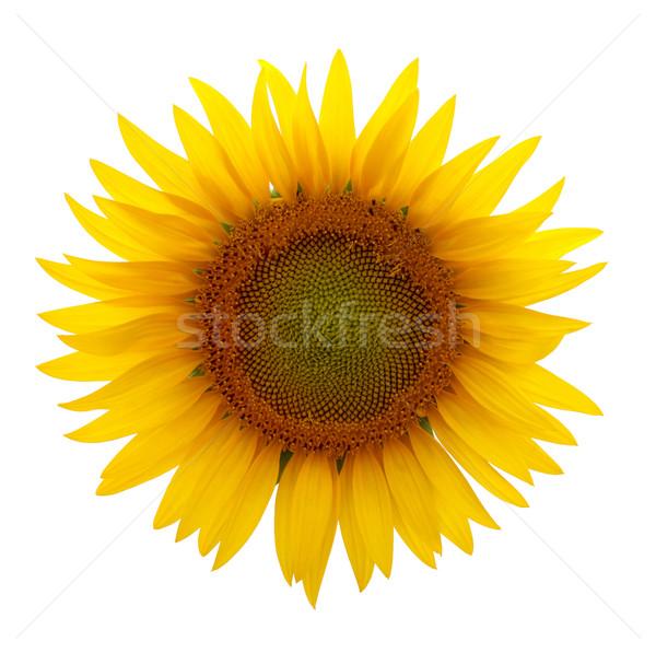 Zonnebloem witte geïsoleerd foto's bloem weide Stockfoto © oorka