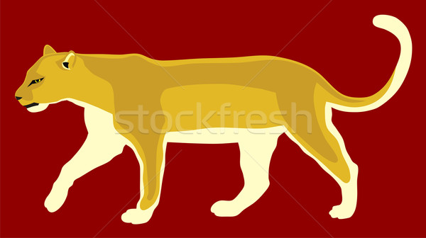 Puma Stock photo © oorka