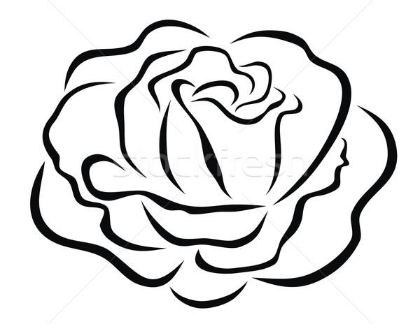 Rózsa absztrakt virág grafikus vektor dekoratív Stock fotó © oorka