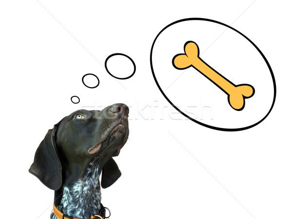 Dreaming dog Stock photo © oorka
