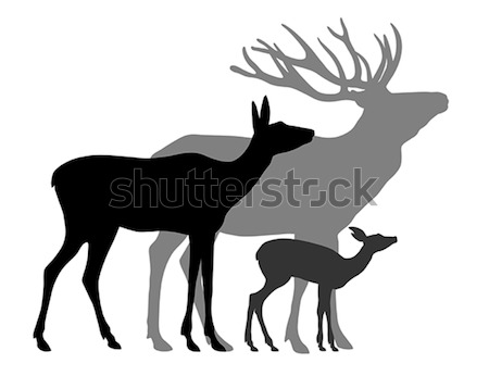 Deers Stock photo © oorka