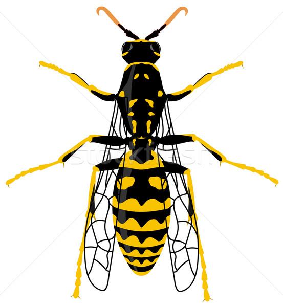 ワスプ 白 動物 翼 黄色 バグ ストックフォト © oorka