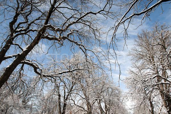 Winter Stock photo © oorka