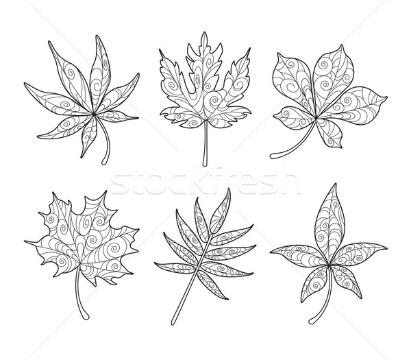 Patterned Maple Leaves in black and white Stock photo © ori-artiste