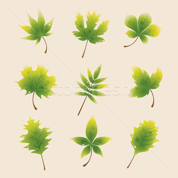 ősz zöld juhar levelek izolált gyűjtemény Stock fotó © ori-artiste